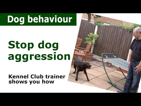 Stop Dog Agression - Aggressive dogs - Canine Behaviour