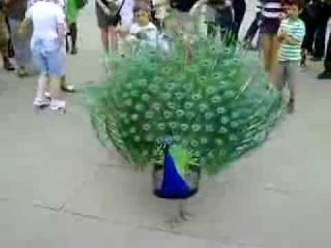 Peacock open its feather for dancing
