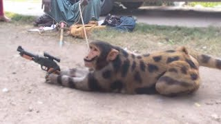 15 Best Trained & Disciplined Animals in the World