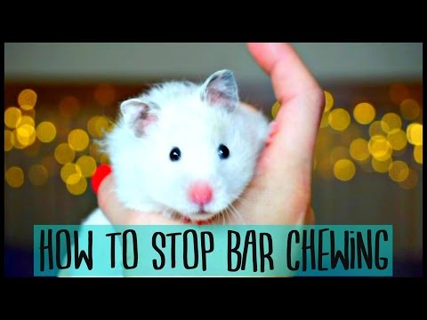 HOW TO STOP HAMSTER BAR CHEWING 🐹