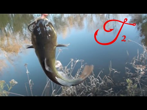 Catch Black Bullhead Catfish with Berkley Gulp Earthworms in a Pond