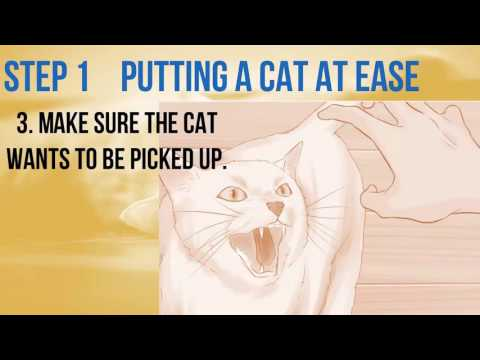 how to pick up the cat