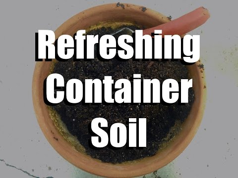 How to Refresh and Re-use Container Soil with Two Simple Ingredients