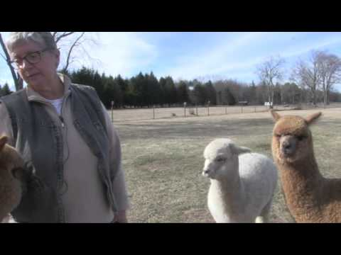 The Farmers of Whately - Tall Grass Alpaca Farm