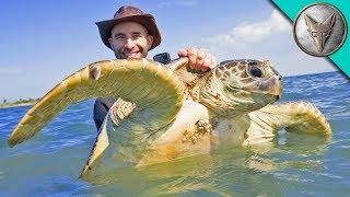 Catching Sea Turtles!