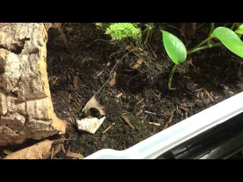 How to Build a Land Turtle Habitat