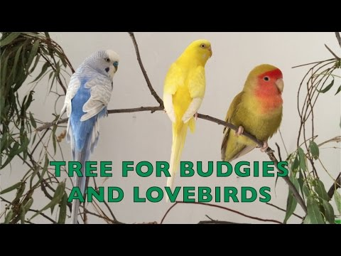 Tree for budgies and lovebirds