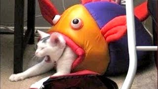 To Laugh Or Not To Laugh Is No Question Here You Will Laugh Funny Animal Compilation