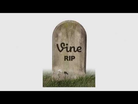 There's an app to replace Vine