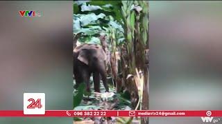 Voi rừng lại liên tục xuất hiện ở Đồng Nai | VTV24