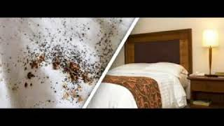 Bed Bug Mattress Removal Bed B..