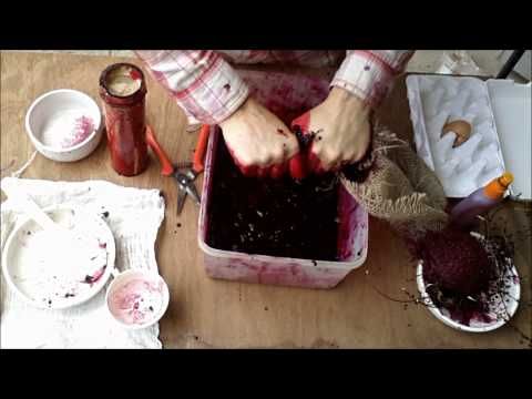 Wild berry video