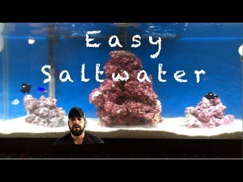 saltwater aquarium setup how to start a saltwater fish tank
