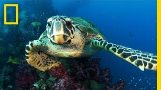 New Protected Ocean Area Is Bigger Than All U.S. National Parks Combined