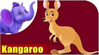 Animal Songs for Kids | Kangaroo Song