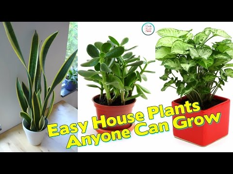 Here Are 20 Super Easy House Plants Anyone Can Grow