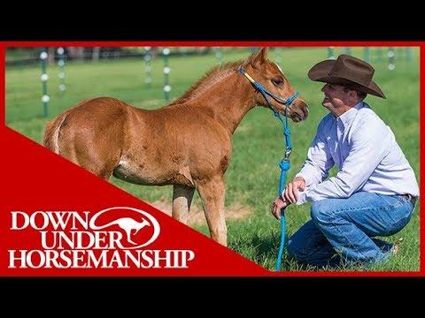 Clinton Anderson: Foal Training - Downunder Horsemanship