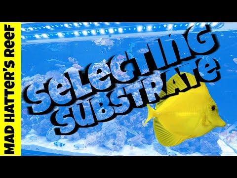 Selecting Substrate for your Aquarium