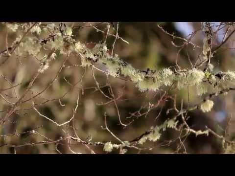 1336 Twigs of trees has moss on it