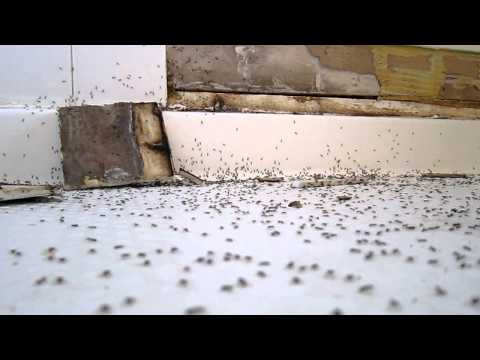 Ants invade shower - aka Why homebuilders suck
