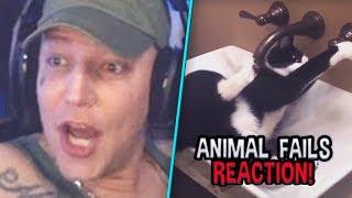 MontanaBlack reagiert auf Animal FAIL Compilation! 😂 MontanaBlack Reaktion