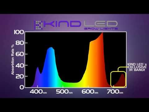 BML LED vs. Kind LED | LED Grow Light Reviews
