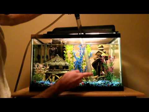 Performing A Freshwater Tank Water Change