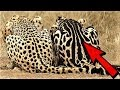 14 Strangest Animal Marking Mutations