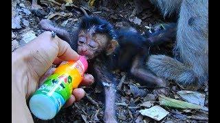 We Rescues Newborn Baby dalton By Give Extra Milk   Look Poor Dolly & Dalton So Weak