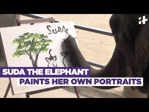 Indiatimes - Suda The Elephant Paints Her Own Portraits