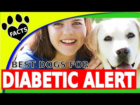 Service Dogs: Top Diabetic Assistance Dog Breeds - Service Dogs for People w Diabetes - Animal Facts