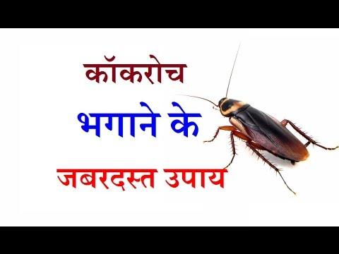 घर में छिपे कॉकरोच से छुटकारा पाने के आसान घरेलू नुस्खे | Cockroach Killer Home Remedies in Hindi