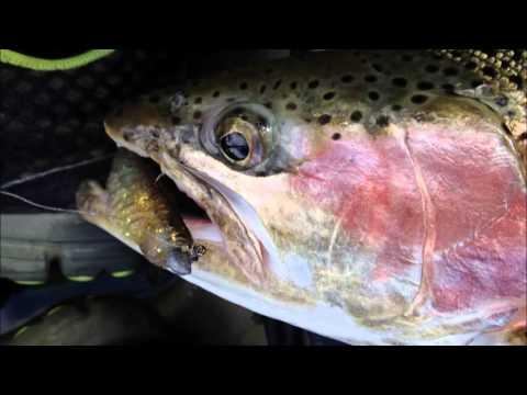 Trout Fishing Lake Lyell