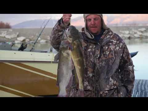 Boatloads of white bass. Early Utah Lake fishing 2018