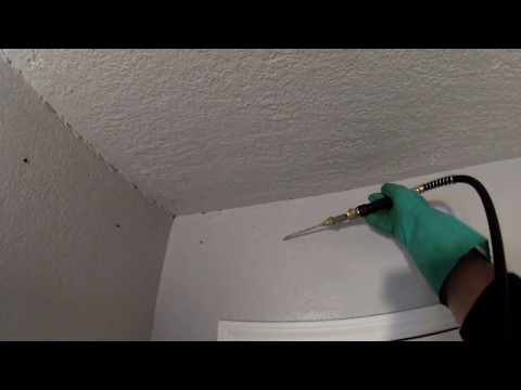 how  treat wood  inside the  wall from termites permanently