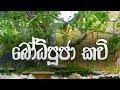 Download Bodhi Pooja Kavi - බෝධි පූජා කවි | Buddhist Puja Chantings | Bodhi Pooja Gatha | Dahami Desawana MP3,3GP,MP4