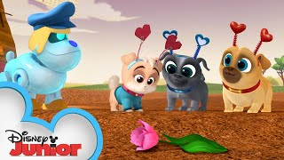 The Perfect Valentine's Day Gift 💕| Puppy Dog Pals | Disney Junior