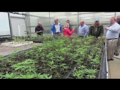 Medical marijuana ordinance put on hold, residents consider lawsuit