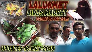 Guru Mandir pigeon Kabutar Market 25-3-2018 Latest Update