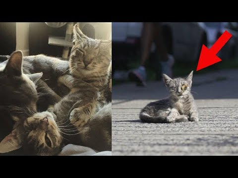 A Couple Rescued This Sick Kitten From The Street – But Still Had To Return To Save Her Siblings