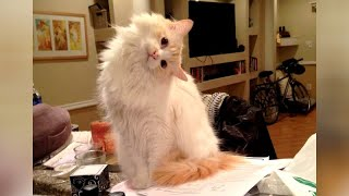 HILARIOUS ANIMALS that will make you LAUGH!
