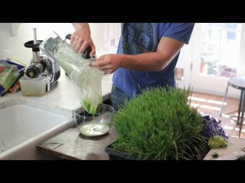 Top Wheat Grass Recipes