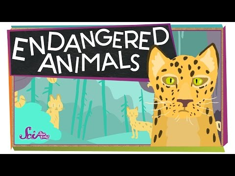 Endangered Animals!