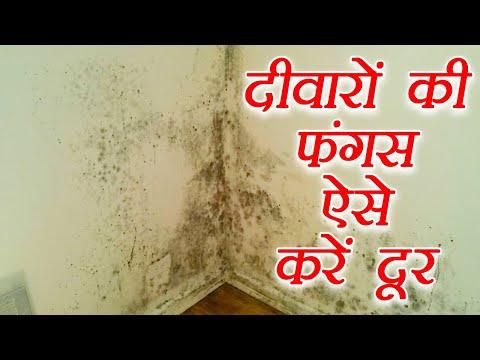 ऐसे करें दूर दीवारों की फंगस | Easy steps to remove fungus from walls | Boldsky