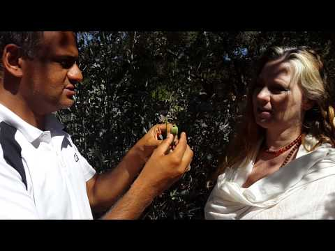 Ayurvedic doctor in California  USA explaining Poppy Plant Benefits