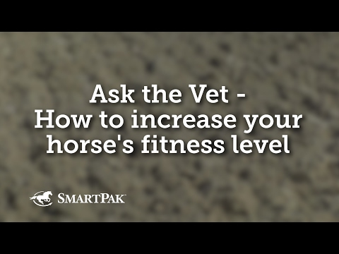 Ask the Vet - How to increase your horse's fitness level