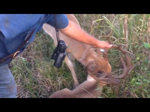 Man Rescues Tangled Deers | Deer Bucks fights