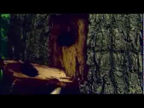 Acute Oak Disease
