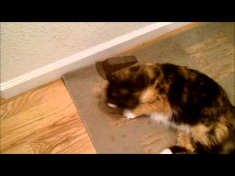 How to Train a Cat to Be a Mouser