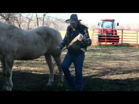 Shady & Shadow #2 Preparing to put Horses to sleep/down ! stall13.com videos